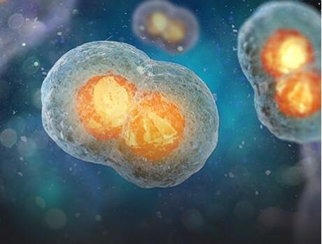 Cell Culture/Fermentation